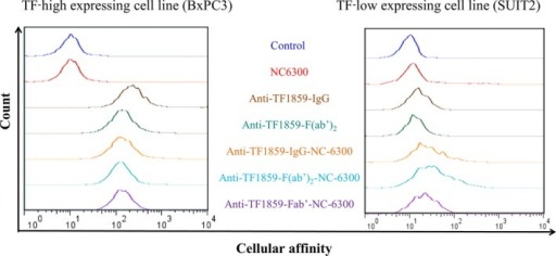 Comparative binding activities were determined with flow cytometry analysis among anti‐TF1859‐NC‐6300 using BxPC3 (tissue factor [TF]‐high expressing) and SUIT2 (TF‐low expressing) pancreatic cancer cells.