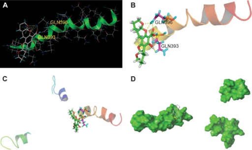 Potential target analysis in silico.Notes: (A) and (B) The binding site of 36Q Htt and compound 1 is GLN369 and GLN393. (C) and (D) Interaction of Htt monomers can form stable trimer complex.Abbreviation: Htt, Huntingtin.