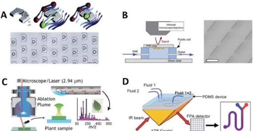 Future directions in microfluidic FTIR devices - A) Advanced microfluidic structures such as droplet generators and cell traps could be used for sample confinement and entrapment in an array format for measurement with SR-FTIR (adapted from Huebner et al.). B) Plasmonic microstructures can be used to increase the sensitivity of IR spectromicroscopy to extremely dilute analytes in solution (adapted from Adato et al. [112]). C) SR-FTIR in open-channel devices can be hyphenated with mass spectrometry for more detailed molecular identification as demonstrated by O'Brien et al. [57]. D) The coupling of SR illumination with large area focal plane array (FPA) imaging detectors can be used to employ SR for ATR imaging and fluidic micro incubators can be used for experiments on live cells (adapted from Chan et al. [108]).