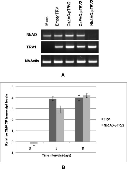 Quantification of NbAO and CMV CP RNA levels in silenced plants.A) Transcript levels of NbAO were assessed by semi-quantitative RT-PCR using complete gene primers. NbActin was used as an internal control and TRV infection was checked by detecting the presence of TRV RNA1. B) Relative CMV CP RNA accumulation in TRV control and NbΔAO-pTRV2 silenced plants. CP RNA accumulation in AO silenced plants was calculated relative to CMV-infected TRV control plants at 3 dpi. The 18SrRNA gene was used to normalize all data and error bars represent the standard deviation about the mean for three independent biological replicates. Relative expression was plotted as Log2 values.