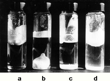 Glass beads (44–60 µm in diameter), made hydrophobic with dimethyldichloro silane.a, 2 g beads in 10 ml water; b, 4 g beads in 10 ml water with countercation K+. Cs+, Ca 2+ or Mg2+. c, 2 g beads in 10 ml water with countercation Li+, Na+ or H+; d, the same as c photographed immediately after setting up; the haziness in the water shows the dropping of beads through the water.