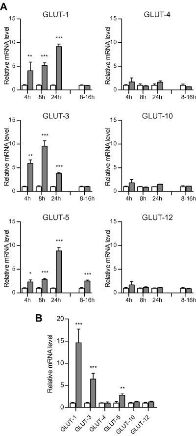Facilitative glucose transporter gene expression in human adipocytes in hypoxia. Adipocytes at day 14 (post-induction of differentiation) were exposed to 21% or 1% O2 for up to 24 h. Total RNA was isolated and GLUT gene family mRNAs quantified by real-time PCR. Results are mean values ± SE (n = 4), expressed as relative to the control group. (A) 'Zen-Bio' adipocytes; (B) SGBS adipocytes. Twenty-one percent of O2 (open bars); 1% O2 (shaded bars). ∗P < 0.05; ∗∗P < 0.01; ∗∗∗P < 0.001, compared to adipocytes in normoxia.