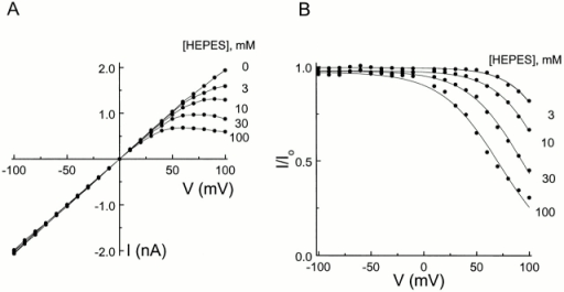 Current–voltage relationship of the IRK1 channel in the presence of various concentrations of intracellular HEPES. (A) Steady state I-V curves with various concentrations of intracellular HEPES, obtained from the data shown in Fig. 3. (B) Ratios of the I-V curves with and without HEPES shown in A. The curves superimposed on the data are fits of the equation I/Io = Kd/(Kd + [HEPES]), where Kd = Kd(0 mV) e−ZFVm/RT. The fits yield Kd(0 mV) = 0.96 ± 0.04 M and Z = 1.0 ± 0.1 (mean ± SEM; n = 4).