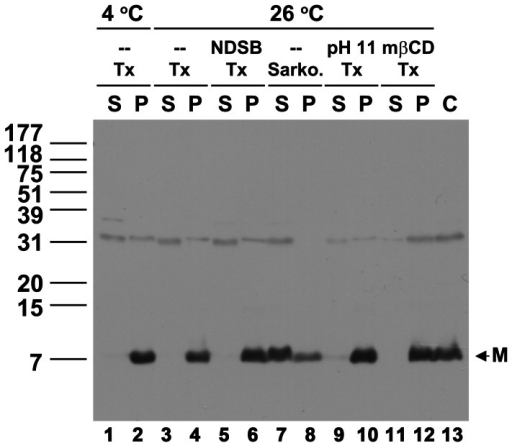 Effects of detergent and additive on extraction of the TGBp3:HA-containing membrane protein complex from P30.The TGBp3-containing membrane protein complexes in P30 were extracted with Triton X-100 (Tx) at 26°C in the presence or absence of high pH (pH 11), NDSB and mβCD, or extracted with 1% Sarkosyl (Sarko.). P and S indicate the supernatant and pellet samples, respectively, after extraction of the P30 with detergent and ultracentrifugation at 100,000 g. C, the TGBp3:HA in P30 before extraction. M, the monomeric TGBp3:HA.