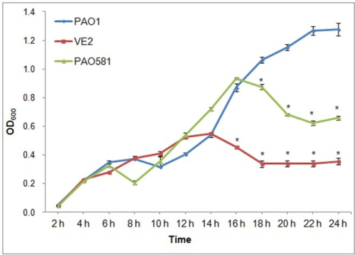 Mucoid mutants of P. aeruginosa display a reduced growth rate compared to the isogenic nonmucoid strain PAO1.The growth curves were created by growth of PAO1 (nonmucoid), VE2 (mucoid) and PAO581 (mucoid) in PIB. The horizontal axis represents time in hrs, while the vertical axis is the optical density at 600 nm. *, represents a significant difference compared to PAO1 (P<0.05).