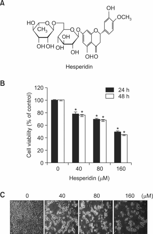 "The effect of hesperidin on cell viability in MSTO-211H cells. (A) Chemical structure of hesperidin. (B) Cell viability effectsof hesperidin on MSTO-211H cells. MSTO-211H cells (3×103 cells/200 μl) were treated with hesperidin (40-160 μM) in 5% FBS-RPMI1640 for 24 h and 48 h. Cell viabilities were measured with MTS assay, as described under ""Material and Methods"". Results are indicated as cell viability relative to untreated with hesperidin, as determined from three independent experiments. Data representedas mean ± SD. The asterisk indicated a significant difference compared with the negative control (*p<0.05). (C) Cell morphological changes in MSTO-211H cells treated or untreated with hesperidin for 48 h."