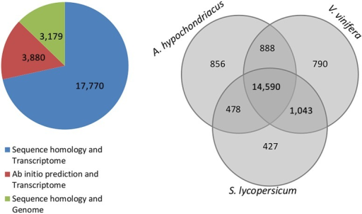 Comparative proteome analysis of A. hypochondriacus, V. vinifera and S. lycopersicum. The pie chart shows the source of evidence for proteins from the assembled transcriptome and genome. 17,770 proteins find evidence in both homology and presence in the transcriptome, 3,880 are ab initio predicted with presence in the transcriptome, and 3,179 are those with only evidence from homology to known plant proteins. The Venn diagram compares the total numbers of A. thaliana genes that are orthologous to the respective genomic scaffolds of A. hypochondriacus, V. vinifera and S. lycopersicum with 14,590 proteins common to all the three species representing three major clades under dicots. This figure appears in colour in the online version of DNA Research.