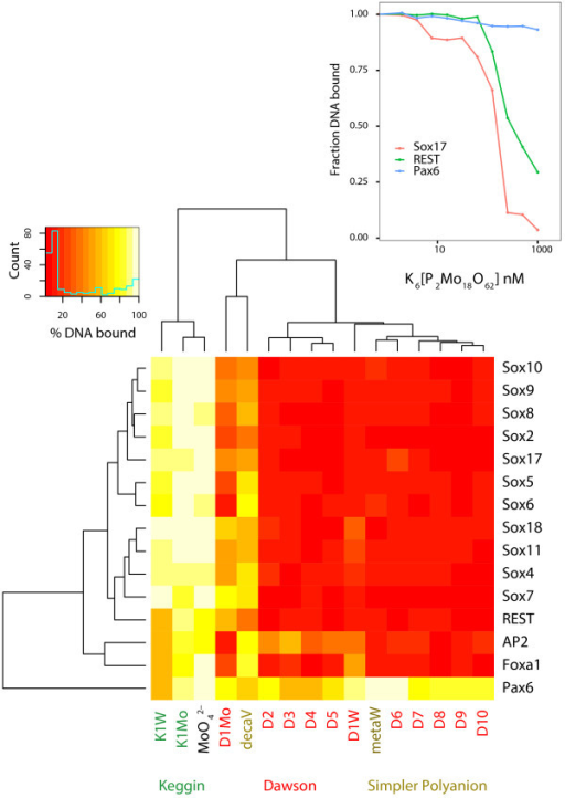 A heatmap displaying the average residual DNA binding activities of 15 different TFs upon treatment with 125 nM of a panel of inhibitor compounds. The residual DNA binding activity is reported as an average of five independent experiments. Two-dimensional clustering of the residual DNA binding activities was carried out by hierarchical clustering analysis (Euclidean distance). (Red color indicates high inhibition, while yellow color indicates relatively lesser inhibition). Inhibitor compounds are color coded by their POM class. Inset shows typical inhibition profiles of representative TFs namely Sox17, REST and Pax6 upon treatment with Dawson POM K6 [P2Mo18O62] (D1Mo), measured by fluorescence anisotropy.
