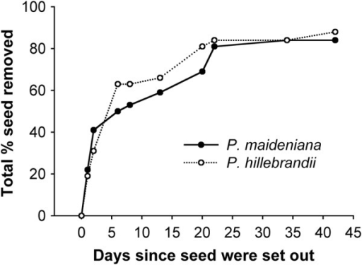 Percent P. maideniana and P. hillebrandii seed removal from the forest floor over 42 days of study in Hawai'i (N = 32 seeds/species). Seeds included here were those available to vertebrates (i.e. those in the SVA and OPEN and not in the NVA).
