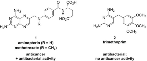 Dihydrofolate reductase (DHFR) inhibitors aminopterin and methotrexate (1) and trimethoprim (2) developed for anticancer and antibacterial therapy, respectively. Aminopterin and methotrexate also possess DHFR-based antibacterial activity, while trimethoprim is selective for bacterial DHFR.