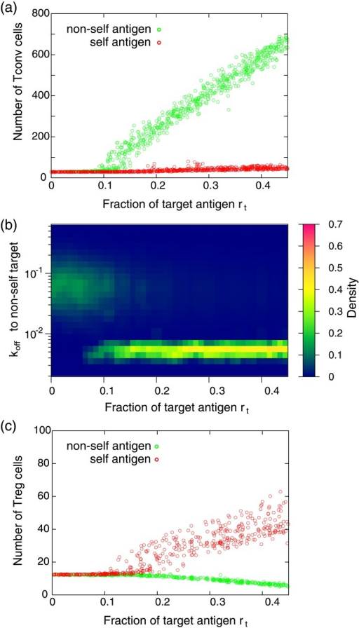 Response of T cell populations with respect to antigen presentation.(a) The average number of Tconv cells as a function of the fraction of the target antigen rt. Each dot represents the result obtained by presentation of different randomly chosen target antigen. The average number of Tconv cells is obtained by averaging the number over 1000 time units after the system settled down to a steady state. (b) The distribution of koff of Tconv cells to the non-self target antigens. The distribution is obtained after the system falls into a steady state. When rt is small (≲ 0.1), the distribution of koff is almost identical to that of supplied Tconv cells to the environment (the distribution is shown in Fig 1b). In contrast, in the region of rt ≳ 0.1, the dissociation rate to the target antigen significantly decreases, indicating that T cells having high affinity to the target are selectively amplified. (c) The average number of Treg cells as a function of the fraction of the target antigen rt. Each dot represents the result obtained by presentation of a different target antigen. The parameters used in these calculations are N = 1000, Mself = Mnon−self = 5000, KTconv = KTreg = 5000, kon = 0.1, α = 30, and β = 10. Tconv and Treg cells with randomly chosen TCRs are continuously supplied to the environment at a ratio of 9:1. The flow rate of T cell supply to the environment is 0.5 cell per unit time, while cells which are not attached to an APC are randomly discarded from the environment with a probability of 0.05 per unit time.