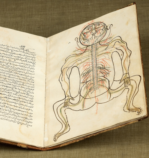 <p>Outline of a human figure in a squatting position showing nervous system anatomy; two small incisions on the abdomen; the upper portion of the body (from head to chest) is covered with Persian text, as are portions of the arms and legs. Figure is hyperextended so that the mouth is at the top of the page, a posture suggestive of a dissection table. Illustration also shows Persian text on facing page. Tashrih al-badan, fol. 14a.</p>