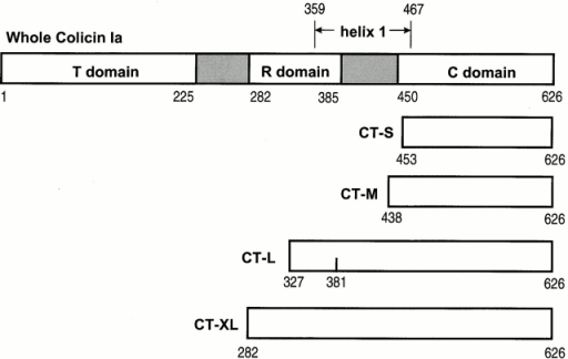 "Linear diagram showing the approximate lengths of whole colicin Ia and the four carboxy-terminal fragments, CT-S, CT-M, CT-L, and CT-XL. The boundaries of the T, R, and C domains are from Wiener et al. 1997. The inter-domain regions are shaded and the full length of helix 1 is indicated. Mutant fragments have a cysteine residue near the amino terminus (453C/CT-S, 439C/CT-M, 326C/CT-L, and ""−3"" C/CT-XL), or not so near it (381C/CT-L). The amino-terminal His-tags are not shown."