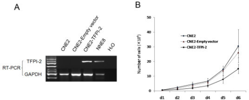 TFPI-2 inhibits NPC cell proliferation. A: RT-PCR validation of stable transfectance of CNE2-TFPI-2 or CNE2-Empty vector. B: Proliferation curves of CNE2 cells, stable transfectants of CNE2-TFPI-2 and CNE2-empty vector. Cells were counted every 24 h for 6 days.