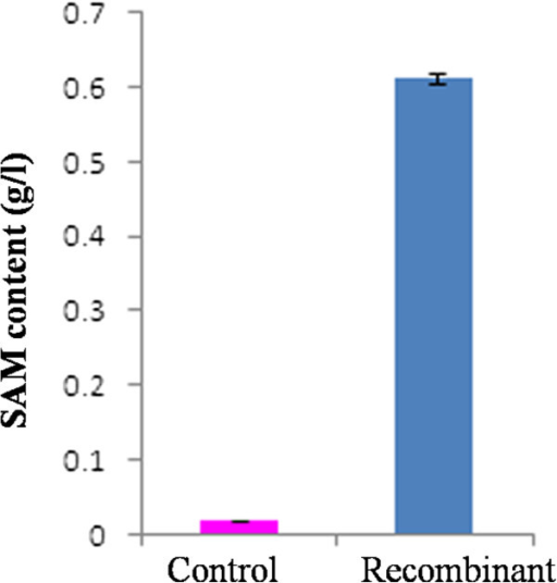 Recombinant P. pastoris GS115 expressing SAM2 gene when cultured in shake flask accumulated 33-fold higher SAM content as compared to Vector alone transformed strain of GS115.