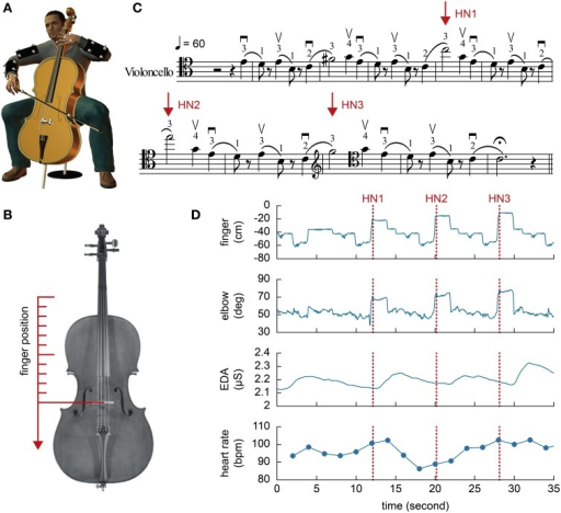 (A) Illustration of the experimental setup. A total of 29 small markers were attached to the upper body of the participants and the instrument. (B) The left hand ring finger position was transformed to align with the longitudinal axis of the instrument and the bridge on the cello was used as the center of the Cartesian coordinate. (C) Music score designed for the purpose of the present study. The three high notes are indicated by the arrows. Fingerings (instructions on which finger to use, where index = 1, middle = 2, ring = 3, little = 4) were specified in the score for the participants. (D) An example of behavioral and physiological measures from a single trial. The heart rate is converted to bpm. Zero in the finger position indicates the position of the bridge.