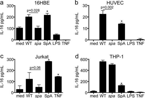 IL-16 secretion is SpA specific in multiple cell types(a) 16HBEs, (b) HUVECs, (c) Jurkats and (d) THP-1s were infected with wt MRSA or spa mutant (MOI 100, 4h for 16HBEs, 2h for HUVECs, Jurkats and THP-1s). SpA, LPS, and TNF were added at a concentration of 0.5 μM, 10 μg/mL, and 100 μg/mL respectively. IL-16 in culture supernatants was quantified by ELISA (*p<0.05 compared to media, Student's t-test, post-hoc Dunnett's test). Graphs represent data from at least 2 independent experiments.