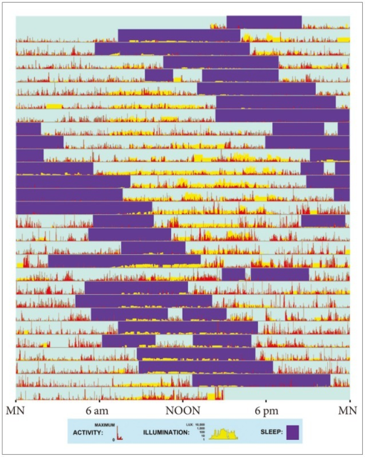 Actigraphic record provides an example of a non-24-hour sleep-wake rhythm. This patient wore a wrist activity-light monitor for 4 weeks (starting and ending about 2 PM). On each day (consecutive horizontal lines), the red vertical bars show relative wrist activity, indicating wakefulness. Purple rectangles highlight intervals of predominant inactivity, inferred as sleep with assistance of the patient's sleep log. Vertical yellow bars display the patient's illumination surroundings, plotted on a semi-logarithmic scale of lux (from 1 lux, e.g., full moonlight to 10,000 lux, e.g., bright sunlight.) Note that on many days, the patient experienced little or no daylight. This patient habitually retired to bed an hour or two later each day and awakened correspondingly later (25.4 hr. cycle.) His sleep drifted around the clock, with only minimal pattern irregularities suggesting interactions with the environment. Brief intervals when the actigraph was removed for bathing were not edited.