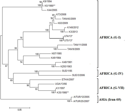 Neighbor-joining phylogeny tree based on serotype A FMDV VP1 coding sequences.The two 2013 Ugandan outbreak FMDV sequences are marked with asterisks (*), and K35/1980** and K5/1980** are the current serotype A virus vaccine strains produced in Kenya and last used in Uganda in 2002. Bootstrap values greater than 50% are marked on the tree. Two of the three global topotypes within serotype A (Africa and Asia) are indicated, as are some of the African genotypes found in Eastern Africa (G-I, G-IV and G- VII). The topotype Asia serotype A FMD viruses were used to out root the tree.