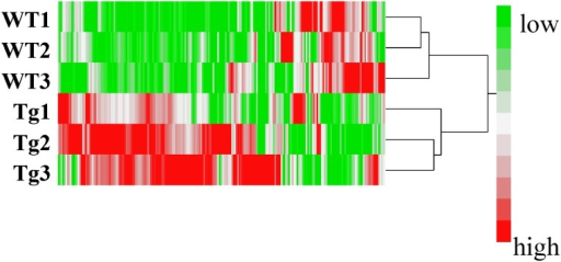 A heat map of hierarchical cluster analysis comparing the metabolite changes between PGC-1α-Tg mice and WT mice.Horizontal axis shows sample names corresponding to the samples used in Fig 1 (WT1, WT2, and WT3 for wild-type and Tg1, Tg2, and Tg3 for PGC-1α-Tg mice). The heat map patterns between WT (upper three lanes) and PGC-1α-Tg (lower three lanes) are clearly distinguishable. The color red demonstrates that the relative content of metabolites is high and green demonstrates that they are low.