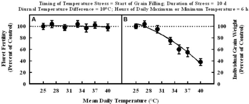 Impact of different mean daily temperatures (°C) at the start of grain filling for a duration of 10 d on (A) floret fertility, fitted line Y = +105.6 – 0.16X; r2 = 0.09 (NS), and (B) individual grain weight, fitted line Y = +66.3 +5.38X –0.15X2; r2 = 0.97 (P < 0.001). Each datum is expressed as percentage of control at optimum temperature (30/20°C, daytime maximum/nighttime minimum) and shown with ± SE.
