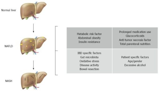 Potential pathogenic factors contributing to the coexistence of non-alcoholic fatty liver disease and inflammatory bowel disease. NAFLD: Non-alcoholic fatty liver disease; IBD: Inflammatory bowel disease.