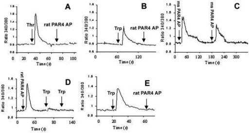 PAR4 mediated Ca2+ mobilization in transfected COS cells. (A) Rat thrombin 50 nM (1st arrow) followed by rat PAR4 AP 100 μM (2nd arrow), (B) Trypsin 1 nM (1st arrow) followed by rat PAR4 AP 100 μM (2nd arrow), (C) Mouse PAR4 AP 500 μM followed by repeat mouse PAR4 AP 500 μM, (D) Rat PAR4 AP 100 μM (1st arrow) followed by trypsin 1 nM (2nd and 3rd arrow), (E) Trypsin 1 nM (1st arrow) followed by rat PAR4 AP 100 μm (2nd arrow). Thr, thrombin; trp, trypsin; ms PAR4 AP, mouse PAR4 activating peptide.