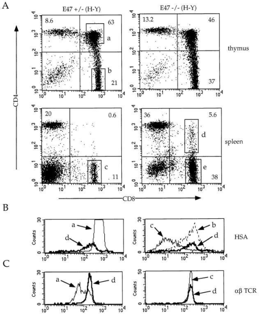Appearance of DP cells in the periphery of E47-deficient/ H-Y transgenic mice. 6-wk-old H-Y transgenic mice of the indicated E47 genotype were analyzed by three-color flow cytometry for the expression of CD4, CD8, and either HSA (B) or TCR-α/β (C). The CD4 versus CD8 profiles for the thymocytes (top panels) and splenocytes (bottom panels) are shown (A), and the numbers in each quadrant indicate the percentage of cells in that population. The boxed regions in the CD4 versus CD8 plots (a–e) indicate the analysis gates used to define the populations analyzed in B and C. In the histogram plots (B and C), the lettered arrows indicate the staining pattern for the corresponding boxed populations in A. To make comparisons clearer, the histograms were plotted in pairs to compare the peripheral DP population with the thymic DP population (left panels) and with the SP populations (right panels).