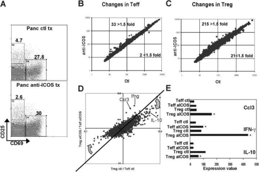 ICOS blockade dampens the immunoregulatory gene profile and correlates with expression of proinflammatory cytokines. (A) Cells from pancreatic infiltrate of 3–4-wk-old BDC2.5 mice were isolated after treatment with anti-ICOS mAb or rat IgG control as indicated, and analyzed for CD25/CD69 expression profiles on CD4+B220− live lymphocytes. Data represent five separate experiments. Cells were sorted to high purity directly from the pancreatic lesion of 3–4-wk-old BDC2.5 mice 5 d after indicated treatments for the CD4+CD25+CD69− Treg population, or the CD25loCD69+ and CD25−CD69− combined Teff populations. RNA was prepared and hybridized to Affymetrix U74Av2 array GeneChips®, and data were analyzed as described in Materials and Methods and in Fig. 4. (B) Expression value comparison plot for Teff populations with anti-ICOS versus control treatment. (C) Similar plot for Treg populations. (D) A ratio plot comparing the ratio of Treg anti-ICOS–treated/Teff anti-ICOS–treated profiles to the same ratio in the Treg and Teff control-treated profiles. Diagonal line indicates where points would fall if nothing changed between the treatments. A selection of genes that are highly over- or underexpressed after anti-ICOS treatment are highlighted. (E) Changes in expression values for cytokines within the lesion in Treg and Teff cells from each treatment group are shown. Asterisks indicate fold changes >1.9.