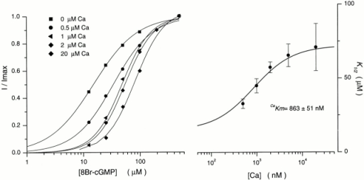 8Br-GMP dependence of cone outer segment current as a function of cytoplasmic Ca2+. (Left) The dependence of normalized current amplitude on 8Br-cGMP in the presence of various Ca2+ concentrations, as labeled. Each data set was measured in a different ep-cone. The continuous line is the Hill equation that best fits the experimental data. At 0 μM Ca2+, K1/2 = 15.1 μM and n = 1.11; at 0.2 μM Ca2+, K1/2 = 37.6 μM and n = 1.1; at 0.5 μM Ca2+, K1/2 = 49.5 μM and n = 1.67; at 2 μM Ca2+, K1/2 = 57.2 and n = 1.6; and at 20 μM Ca2+, K1/2 = 77 μM and n = 1.8. (Right) The dependence of the K1/2 value of the Hill equation on Ca2+. The data points are the average (±SD) of measurements in different ep-cones. Complete statistical information is given in Table . The continuous line is a modified Michaelis-Menten function () that best fits the experimental data.