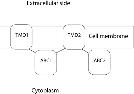 Overall domain topology of ABCB1, ABCC4 and ABCC5.