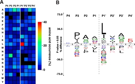 MMP-2 active site mapping. A, heat map for the amino acid occurrences in P4–P4′ for all identified MMP-2-generated neo-N-termini (n = 1,183). CLIP-TRAQ-TAILS analysis confirms the predominant MMP-2 preferences for leucine in P1′ and proline in P3 position. B, protein sequence logo calculated from the same data set applying correction for natural amino acid abundance. The logo was generated using the iceLogo software package (48).