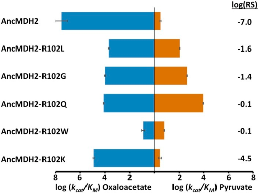 Alternative LDH mutations in AncMDH2.Relative specificity (RS) is described in legend of Figure 4.DOI:http://dx.doi.org/10.7554/eLife.02304.03110.7554/eLife.02304.032Figure 8—source data 1.Kinetic parameters for specificity residue mutants.DOI:http://dx.doi.org/10.7554/eLife.02304.032