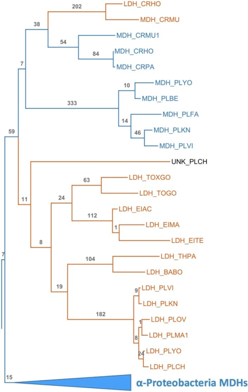 Apicomplexan M/LDH Clade.Same phylogeny as Figure 3B with aLRT branch supports and clades shown in full detail.DOI:http://dx.doi.org/10.7554/eLife.02304.013