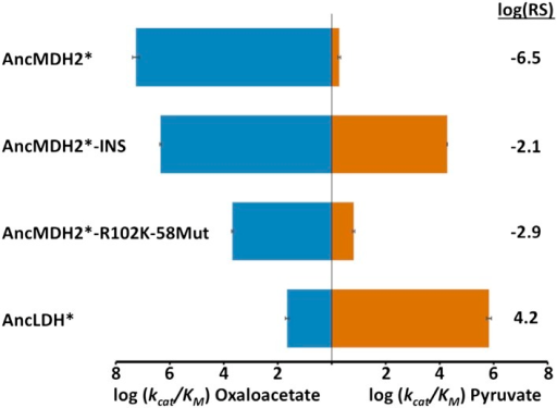 Alternative ancestral enzymes.INS refers to the reconstructed six amino acid insertion from AncLDH*. 58Mut refers to remaining residue differences between AncMDH* and AncLDH* that are not R102K or INS. Relative specificity (RS) is described in legend of Figure 4.DOI:http://dx.doi.org/10.7554/eLife.02304.028