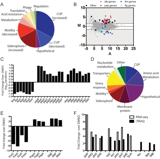Global transcriptional and proteomic responses to ec240. (A) Genes whose expression is dysregulated by growth in ec240 rather than DMSO, as identified by RNA-Seq analysis. Genes were classified by using KEGG (http://www.genome.jp/kegg/) and EcoCyc (http://www.ecocyc.org). The genes in each functional category are shown as percentages of the total genes dysregulated. (B) MA plots of UTI89 gene abundance following treatment with ec240. Each dot represents an annotated UTI89 gene with the log2 of its relative abundance in ec240 versus that in DMSO (M) plotted against the average log2 of its abundance under both conditions (A). M and A values are based on data from three biological replicates under each growth condition. The dotted lines indicate 3-fold changes. (C) Fold changes in CUP gene transcripts altered in UTI89 grown with ec240 rather than the DMSO vehicle control, as determined by RNA-Seq. Genes are shown in their order within the operon. (D) Proteins dysregulated after growth in ec240 rather than DMSO, as determined by iTRAQ analysis. Proteins were classified by using KEGG (http://www.genome.jp/kegg/) and EcoCyc (http://www.ecocyc.org). The proteins in each functional category are shown as percentages of the total proteins dysregulated and include proteins with increased and decreased abundances. (E) Fold changes in CUP proteins altered in UTI89 grown with ec240 rather than the DMSO vehicle control, as determined by iTRAQ analysis. (F) Dysregulation by ec240 of siderophore-related and iron transport genes by both RNA-Seq and iTRAQ analysis. Shown are fold changes in transcript or protein levels in UTI89 grown in ec240 rather than DMSO. Genes are shown in their order within the operon.