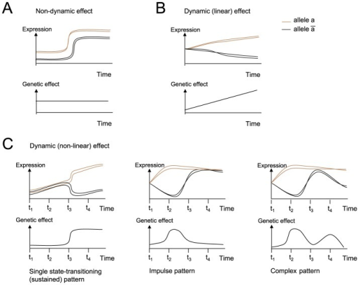 Temporal genetic effect patterns.Schematic view of gene expression patterns (top) and the relevant temporal genetic effects for these genes (bottom). The cartoons demonstrate a non-dynamic genetic effect pattern (A), a dynamic, linear genetic effect pattern (B), and a dynamic, non-linear genetic effect pattern (C). Top: shown are gene expression levels (y-axis) during a response to stimulation (x-axis). Each curve represents measurements in a different homozygous animal strain (segregants), where brown or black indicates whether the genotype of the associated genetic variant is  or , respectively, in each strain. Bottom: shown are genetic effects (that is, the change in gene expression between the  -carrying and  -carrying strains, y-axis) during a response to stimulation (x-axis). (C) Examples of non-linear genetic effect patterns, which are the focus of this study, including (left to right) a single state-transitioning pattern, which may be followed by a sustained new level of genetic effect, a single-pulse (impulse) pattern, and a multiple-pulse (complex) genetic effect pattern.