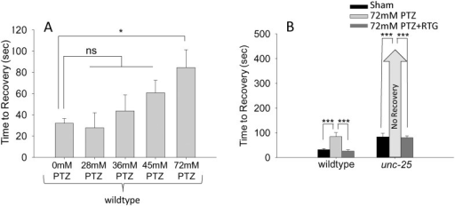 The GABA receptor antagonist PTZ increases recovery time following electroshock.(A) Electric shock recovery times for wild-type animals treated with varying doses of PTZ. (B) 72 mM PTZ extended recovery time of wild-type C. elegans and enhanced deficits in recovery of unc-25 mutants. Both genotypes showed improved recovery when exposed to a cocktail of 72 mM PTZ + 1 mM RTG. Error bars represent standard error of the mean and significance was determined using Student's t-test where ***P≤0.001 and *P≤0.05 ns = not significant and n≥15.
