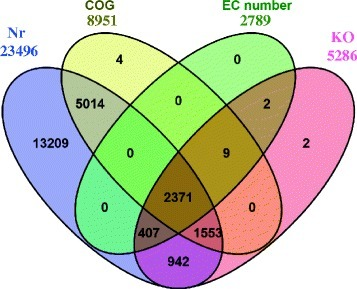 Venn diagram of annotated contigs' number in different database. Nr: NCBI's non-redundant database. COG: Clusters of Orthologous Groups (COG) database. EC number and KO: the annotation results of KEGG database. Each figure means the number of annotated contigs in corresponding databases