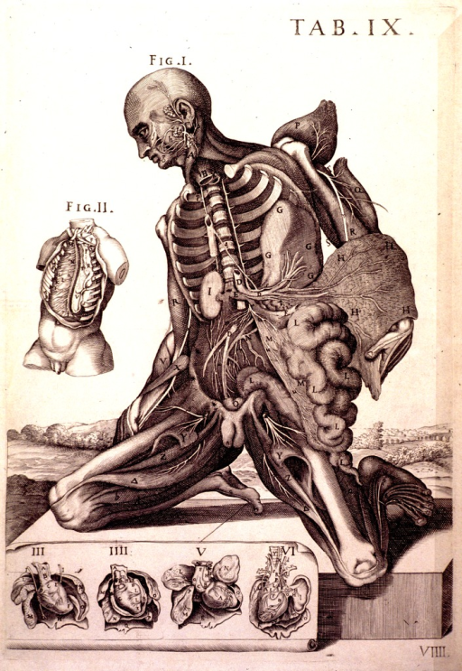 <p>The central image is a frontal cross-section of a human male kneeling on a podium in a landscape.  Each of the body parts is labeled with a letter of the alphabet.  There are five other figures (numbered 'II' to 'VI') surrounding the central image.</p>