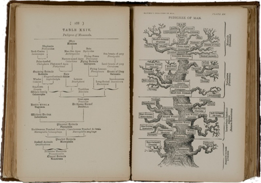 <p>Images of facing pages (p. 188-189) from Haeckel's The evolution of man. P. 188 shows Table XXIV, pedigree of mammals. P. 189 has illustration that shows life as a gnarled and ancient tree, from which different branches spring.</p>