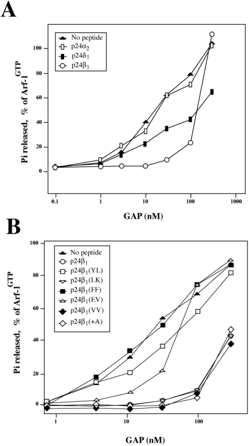 Effect of peptides derived from p24 proteins on ArfGAP1 activity. (A and B) Activity was assayed on Arf-1 preloaded with [γ-32P]GTP in the presence of liposomes and in the absence or presence of 0.2 mM of respective peptides, and the release of [γ-32P] was monitored. (C and D) Activity was assayed on Golgi membrane-bound Arf-1 preloaded with [γ-32P]GTP. At time zero, 50 nM ArfGAP1 were added to each incubation except to the control, in the presence or absence of peptides at a concentration of 0.2 mM unless otherwise indicated. At different time points, the amount of [γ-32P]GTP, which remained bound to membranes, was determined.
