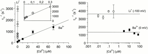 For WT channels, comparison of kinetics of Cd2+ block of Ba2+ and Li+ currents. (Left) Plot of reciprocals of corrected open-time constants versus [Cd2+] for Ba2+ (▪; VM = 0 mV) and for Li+ (○; VM = −100 mV). Linear regression fits (solid lines) to these data yield rate constants for Cd2+ block of Ba2+ (slope = 1.8 × 107 M−1 s−1) and of Li+ (slope = 8.2 × 109 M−1 s−1) currents. (Inset) Cd2+ block of Li+ data on an expanded scale. (Right) Plot of reciprocals of shut time constants versus [Cd2+] for Ba2+ (▪; VM = 0 mV) and for Li+ (○; VM = −100 mV). Horizontal lines are drawn through the mean of all the data points and yield rate constants for Cd2+ block of Ba2+ (1,309 s−1) and of Li+ (3,538 s−1) currents. For Ba2+ currents, n = 3–5 patches at each concentration of Cd2+. For Li+ currents, n = 3 patches at each Cd2+ concentration, except for 0.1 μM Cd2+, for which n = 2 patches.