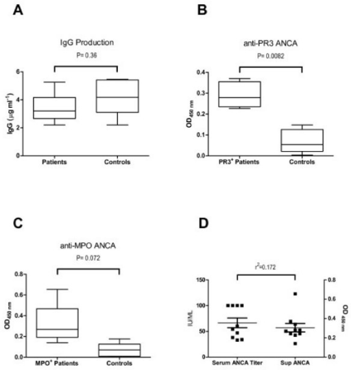CpG-B induces ANCA production from vasculitis patients in vitro. PBMCs isolated from patients with active ANCA associated vasculitis, 5 PR3+ and 5 MPO+ ANCA patients, were cultured with CpG-B and IL-2. Each patient assay was paired with a healthy control. After 12 days of culture, supernatants were harvested. IgG concentration and supernatant reactivity to either PR3 or MPO was measured by ELISA. The amount of IgG detected in the supernatants was of 5.5 ± 2.2 μg mL-1 in the patients compared to 4.1 ± 1.2 μg mL-1 in the control group (A). Figure B shows the reactivity of the supernatants from PR3+ ANCA patients towards PR3 antigen. The difference against control individuals was highly significant (P = 0.0082). Figure C shows the reactivity of the supernatants from MPO+ ANCA patients towards MPO antigen. The difference was not significant (P = 0.072) although their supernatants showed a clear tendency towards higher reactivity compared to controls. There was no correlation between patients' serum ANCA titre at the time of the assay and their in vitro production of ANCA in response to CpG-B as shown in D (r2 = 0.172).