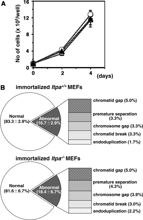 ITPA-deficient phenotypes are reversed during immortalization. (A) Immortalized Itpa−/– MEFs (triangle) showed the same proliferation rate as did immortalized Itpa+/+ (circle) and Itpa+/− (square) MEFs. Error bars represent the SD (n = 3 independent isolates). (B) The frequency of chromosomal abnormalities was decreased in immortalized Itpa−/– MEFs to the levels seen in immortalized Itpa+/+ MEFs. Data are shown as the mean ± SD (n = 3 independent isolates).