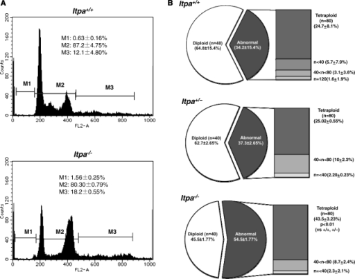 Increased DNA content in ITPA deficient immortalized MEFs. (A) Flow cytometric analysis of the cell cycle was performed and the sub G1 fraction (M1), diploid fraction (M2) and a fraction with an increased DNA content (M3) were determined. (B) ITPA deficiency increased chromosomal ploidy in immortalized MEFs. Percentages of diploid, tetraploid and others are shown in pie charts with the mean ± SD (three independent isolates). The frequency of tetraploidy was increased significantly in Itpa−/– MEFs. Results show non-repeated measures ANOVA (two-tailed): P = 0.00015. P-values are shown following a Bonferroni post hoc test.