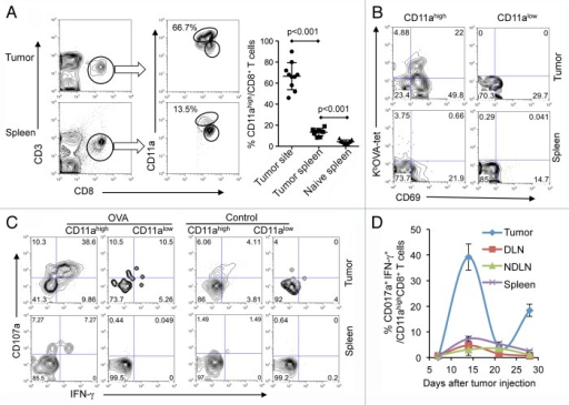 Figure 1. Endogenous tumor-specific CD8+ T cells in neoplastic lesions. (A–D) B16-OVA tumor cells were subcutaneously injected into naïve C57BL/6 mice. (A) On day 14 after tumor-cell injection, lymphocytes were isolated from neoplastic lesions and spleens and were stained with antibodies specific for CD3, CD8, CD11a, CD69 as well as with a KbOVA tetramer (KbOVA-tet). The frequency of CD11ahigh cells among CD8+ T cells in the tumor tissue and spleens of tumor-bearing or naïve mice is reported (n = 10). (B) Antigen specificity of CD11ahigh and CD11alowCD8+ T cells. (C) Cytotoxic T lymphocyte (CTL) activity of CD11ahigh and CD11alowCD8+ T cells following re-stimulation with OVA or control peptide for 5 h ex vivo. One of three independent experiments is shown. (D) Kinetics and distribution of functional CD11ahighCD8+ T cells in tumor tissues, draining lymph nodes (DLNs), non-draining lymph nodes (NDLNs) and spleen. The average percentage ± SD of CD107a+IFNγ+ cells among CD11ahigh CD8+ T cells is shown (n = 3).