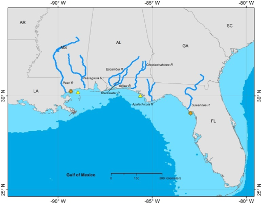 Documented distribution of Gulf Sturgeon in North America, determined from acoustic and archival telemetry projects.The orange asterisks mark the easternmost and westernmost locations of confirmed detections of acoustic-tagged Gulf Sturgeon. Gulf Sturgeon spawn in coastal rivers including the eight shown on this map. Spawning and non-spawning Gulf Sturgeon typically remain in coastal rivers until fall and occupy estuarine and nearshore marine waters during winter. Yellow triangles indicate winter concentration areas for Gulf Sturgeon from two or more river systems. The 100 m isobath is shown as the light blue areas near the coast.