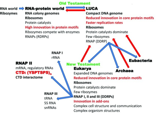 Figure 6. The Old and New Testaments of molecular biology describing evolution of multi-subunit RNAPs from the RNA-protein world to LUCA and branching to LECA. The red arrows indicate that LUCA may have eaten the RNA-protein world and that more modern organisms may have devoured and/or out competed LUCA. According to this description, eubacteria and archaea maintain similar features to LUCA. Higher order complexity in eukaryotic gene regulation developed around the CTD of RNAP II and chromatin, and these processes are posited to be strongly co-evolved.