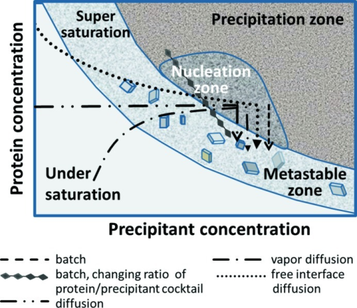 A simplified scheme of a protein crystallization phase open i a simplified scheme of a protein crystallization phase diagram in addition to precipitant concentration ccuart Images
